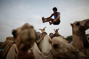 ed_ou_camel_jump_nyt
